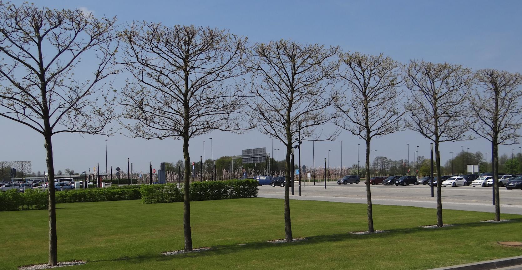 Lotnisko Wrocław. Piękne drzewa. 2018 rok. Zdjęcie Karol Placha Hetman